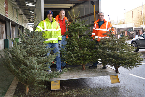 Treecycle your Christmas tree with Pilgrims Hospices