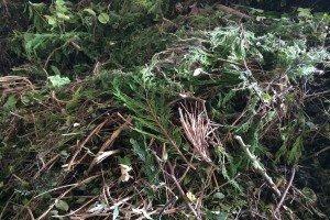 Composting, Organic Treatment